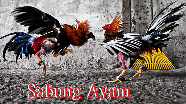 Judi Sabung Ayam Online Android